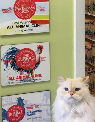 Meet our Mascot The Donald Best Veterinarian in the Florida Keys