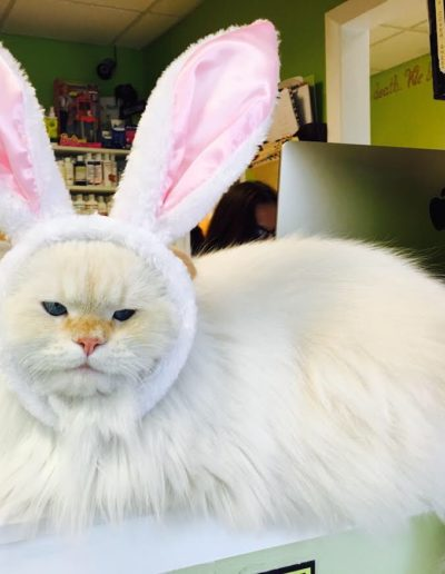 Meet our Mascot The Donald Happy Easter