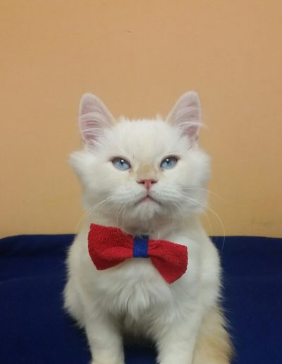 Meet our Mascot The Donald looking dapper in a bow tie