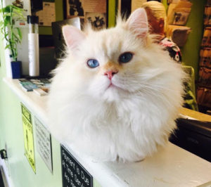 About All Animal Clinic Key West: Meet our Mascot The Donald