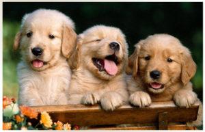 Pet Photos Contest and Entries