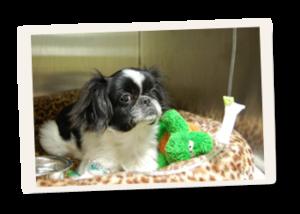 All Animal Clinic Services Medicine