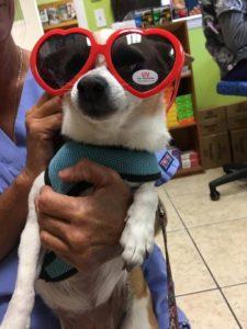 All Animal Clinic Key West